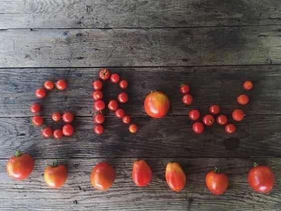 "Collection of Tomatoes making the name ""Grow"""